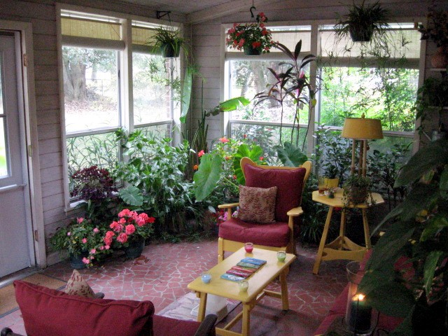 Moved Plants Into My Sunroom Today Pictures Due To Threat Of Frost