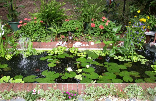Please post pics of your goldfish lily pond for Best pond plants for goldfish