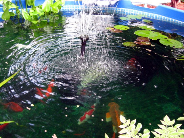 Here are pictures of my pump in operation on my holding pond for Blue koi pond liner